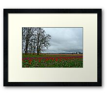 Wooden Shoe Tulip Farm Landscape Framed Print