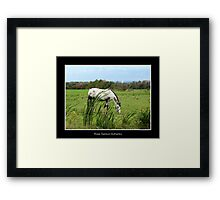 Horse in a field Framed Print