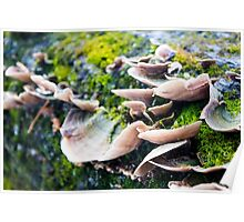 Fungus and Moss on Tree Bark Poster