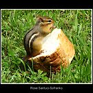 Chipmunk saying grace before a meal by Rose Santuci-Sofranko