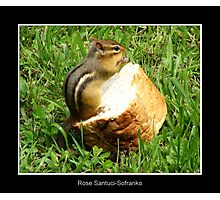 Chipmunk saying grace before a meal Photographic Print