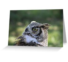 "Great Horned Owl - ""Gordon"" Greeting Card"