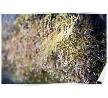 Fuzzy Moss on Tree Poster