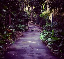 Walking in the City Botanic Gardens after Uni by Monique Alvis