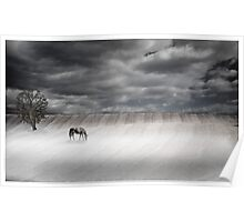 Misty Pasture Poster