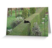 Hedge Cat Greeting Card
