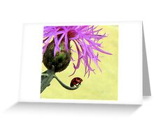 Lady beatle Greeting Card