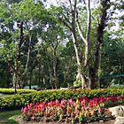 Eden by Azamuddin