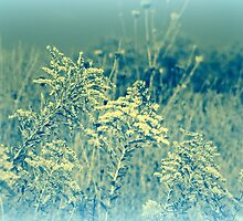 The Beauty Of Goldenrod - Wildflower - Solidago gigantea by MotherNature2