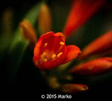 Bloomin' Clivia by DSMIW