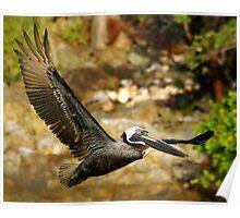 Pelican in Flight 4 Poster