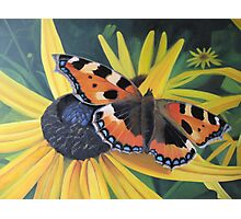 September Butterfly Photographic Print