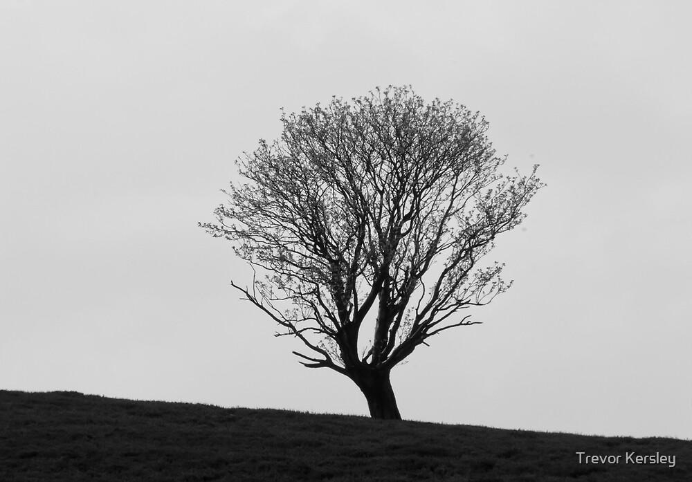 Tree Silhouette by Trevor Kersley