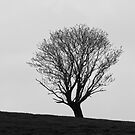 Tree Silhouette by Trevor Kersley