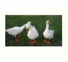 Three Ducks Art Print