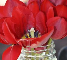 Tulips  by mablec