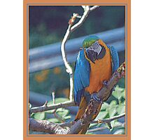 BLUE AND ORANGE PENCIL Photographic Print