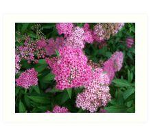Pink Sprinkles Art Print