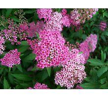 Pink Sprinkles Photographic Print