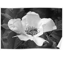 Black Jetbead Flower (bw) Poster