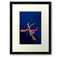 Coloured leaves Framed Print