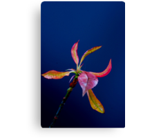 Coloured leaves Canvas Print