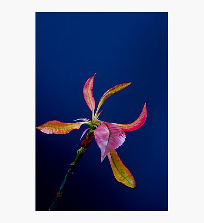 Coloured leaves Photographic Print