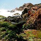 Moss on the Rocks by Jason Dymock Photography