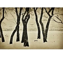 January Trees Photographic Print