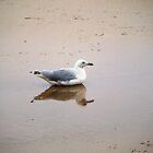 Bird in Reflection by Jason Dymock Photography