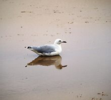 Bird in Reflection by Jason Dymock Photography