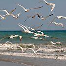 Seagulls in Flight by MaryLynn