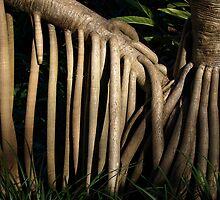 Pandanas Roots by Jason Dymock Photography