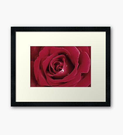 Velvety Rose Framed Print