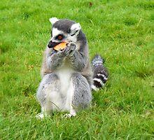 Lemur Eating a Piece of Carrot by HappyBundom