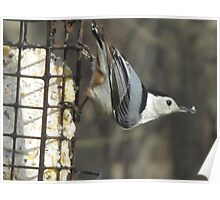Mr. Nuthatch Poster