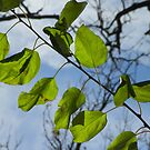 Pretty Leaves by Diane Trummer Sullivan