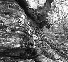 Advantageous Outcrop - Blue Ridge Parkway by Glenn Cecero