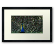 Showing off for the ladies Framed Print