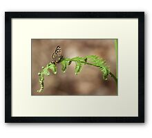 Brown Butterfly Framed Print