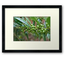 Olive Tree... Framed Print