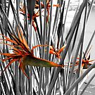 Birds of Paradise - Kew Gardens by Victoria limerick