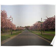 Blossom Street. Poster