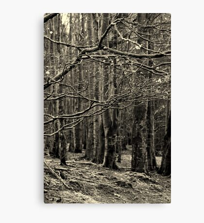 Forest branches b&w Canvas Print