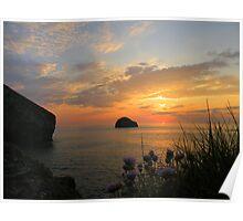 Cornwall: Sea Pinks at Sunset Poster