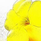 Yellow Bell Buttercup  by islefox