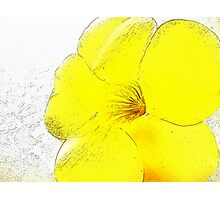 Yellow Bell Buttercup  Photographic Print
