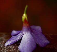 Petals by Melissa Ann Blair