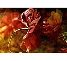 Poppy in the Wind Photographic Print