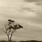 A Storm Approaches and Life is Beautiful (sepia) by Anthony Pipitone